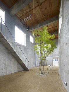 An indoor courtyard with an earth floor and central tree is concealed behind the concrete walls of this bulky house.