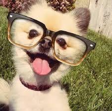 Você sabia que o nariz de cada cachorro é único, assim como nossa impressão…