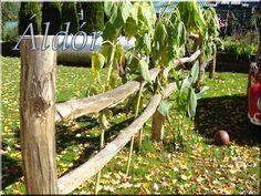 akác oszlopot, karámfát keres Garden Bridge, Fence, Outdoor Structures, Plants, Vintage, Flora, Vintage Comics, Plant, Primitive