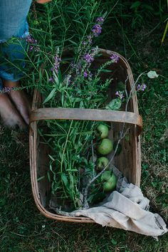 a daily something: Wildflower Picking in Upstate NY