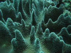 Coral polyps, Indonesia | Flickr - Photo Sharing!