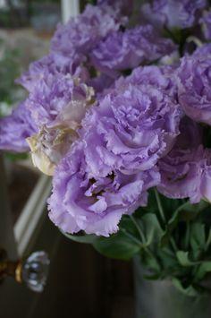 eustoma Fringe lavender
