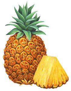 Realistic watercolor tropical fruit stock art illustrations including banana, mango, pineapple, figs, and pomegranate. Pineapple Illustration, Fruit Illustration, Food Illustrations, Watercolor Illustration, Fruits Drawing, Stock Art, Schneider, Drawing Ideas, Still Life
