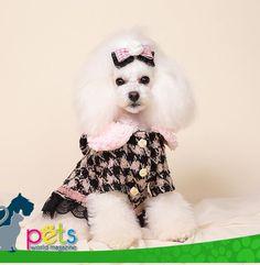 Buenos días ☀️feliz fin de semana 👍🏽  #PetsWorldMagazine #RevistaDeMascotas #Panama #Mascotas #MascotasPanama #MascotasPty #PetsMagazine #MascotasAdorables #Perros #PerrosPty #PerrosPanama #Pets #PetsLovers #Dogs #DogLovers #DogOfTheDay #PicOfTheDay #Cute #SuperTiernos
