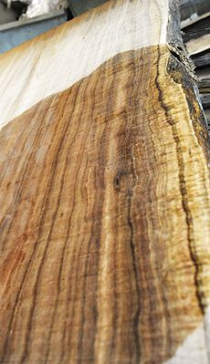 Beautifully figured Tasmanian Blackwood log with gorgeous color and grain! ~ Hearne Hardwoods Inc.
