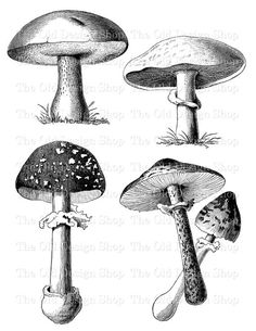black and white clipart, mushroom graphics, vintage