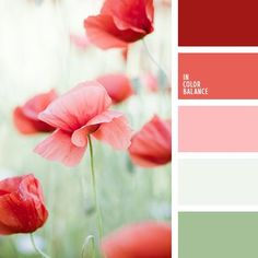 Color Palette by In Color Balance Colour Pallette, Colour Schemes, Color Combos, Paint Schemes, Red Colour Combination, Summer Colour Palette, Paint Combinations, Color Balance, Design Seeds