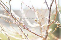 stock photography   tslapointedesign.com