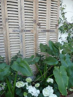 clever idea for hiding an ugly fence