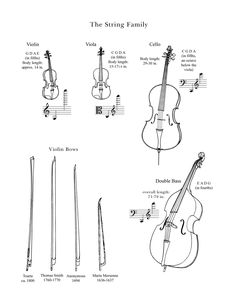 """""""The String Family"""" : Drawings of instruments in the string family from the Lancaster Symphony"""