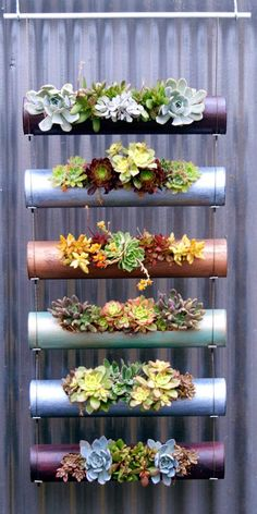 Succulent mania. Interesting twist on a vertical garden!