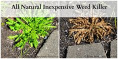 Homemade All Natural Inexpensive Weed Killer