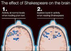 Shakespeare and brain activity.