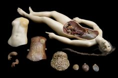 Image result for victorian  medical teaching female body wax model