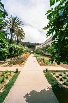 Herb Garden. Getty Villa, Los Angeles. Voigtlander Bessa R3A, 15mm f/4.5 on Kodak Ektar 100. 1/250 @ f/8. #visibleinlight #LAnalog