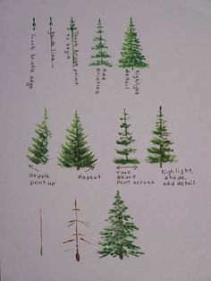 Watercolor Pine Tree Painting tutorial with step by step process photos Watercolor Trees, Watercolor Paintings, Watercolors, Watercolor Christmas Tree, Christmas Tree Drawing, Watercolor Artists, Watercolor Portraits, Watercolor Landscape, Art Paintings