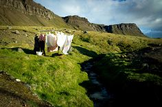 drying laundry in iceland