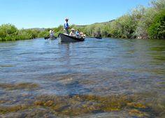 Beaverhead River Montana Fishing