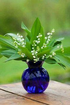 Real lilies-in-the - valley.FRAGRANT &  tender.Неподдельное очарование и аромат.Хрупки и нежны как никакие другие цветы.