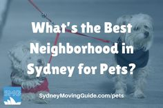 Are you moving to Australia with pets? Want to know the best neighborhood to live in Sydney with Pets?