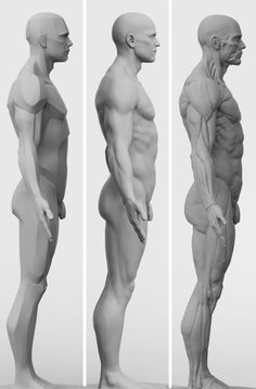 // 3dtotal's anatomical collection: 3 piece set of male figures //