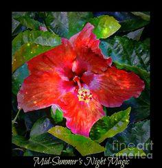 Title:  Mid Summers Night Magic  Artist:  Lilliana Mendez  Medium:  Photograph - Photographs