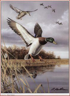Hautman Brothers Wildlife Paintings, Wildlife Art, Animal Paintings, Art Canard, North American Animals, Bob Ross Paintings, Duck Art, Hunting Art, Cowboy Art