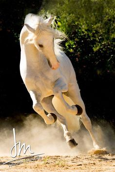 """""""I call horses 'divine mirrors' - they reflect back the emotions you put in. If you put in love and respect and kindness and curiosity, the horse will return that."""" Allan Hamilton"""
