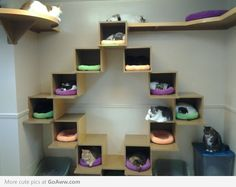 I would love to have wall space like this sleeping area and the tracks above it for our cats!