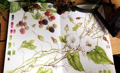 Sketchbook Botanical Art Online with Dianne Sutherland, botanical art courses Watercolor Journal, Watercolor Flowers, Watercolor Art, Watercolor Portraits, Nature Sketch, Nature Drawing, Botanical Flowers, Botanical Prints, Illustration Courses