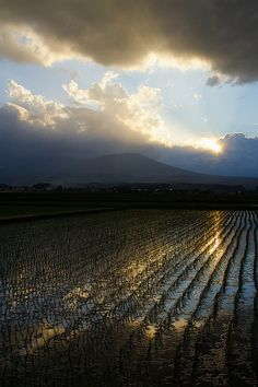 Where Heaven and Rice Fields meet, Iwate, Japan.