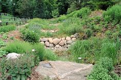 Vegetated swale with built in check-dam at UMich Arboretum