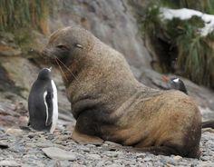 unusual animal friendships   Unusual Animal Friends [ Caters News Agency ]