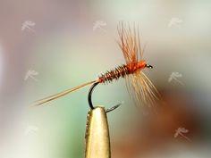 https://pescandoamosca.files.wordpress.com/2009/01/faisan_dry.jpg