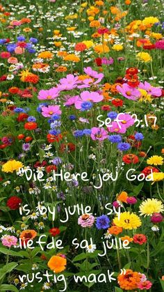 Goeie More, Bible Verses, Plants, Jewelry, Jewlery, Jewerly, Schmuck, Jewels, Scripture Verses