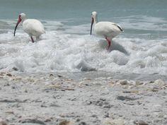 Sanibel Island, Florida Sanibel Beach, Win A Vacation, Captiva Island, Florida Living, Sunshine State, Florida Travel, Weekend Trips, Key West, Vacation Destinations