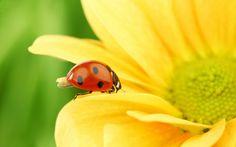 Nützlinge im Garten helfen Ihnen bei der Blattläusbekämpfung