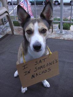 dog shaming. I love these.