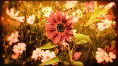 Guinevere's Garden - Douglas Moorezart, Fine Art Prints, copyright 2014 - http://fineartamerica.com/featured/vintage-cottage-garden-douglas-moorezart.html