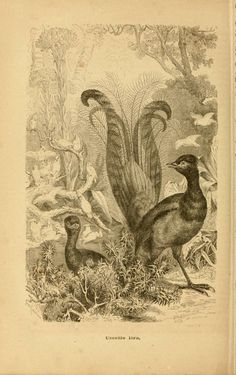 v. 3 - La vita degli animali : - Biodiversity Heritage Library