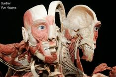 Body Anatomy, Human Anatomy, Gunther Von Hagens, Bodies Exhibit, Human Body Science, Anatomy For Artists, Vintage Medical, Anatomy And Physiology, Figure Drawing