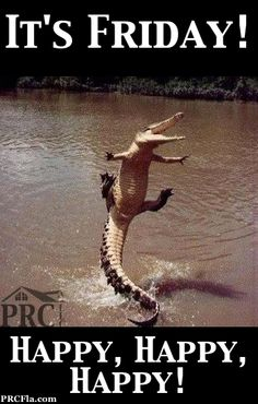 Meanwhile somewhere in Florida ... there are Gators dancing for Friday joy. :) #funny #gator