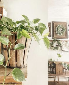 White Farmhouse, Little White, Humble Abode, Vignettes, Business Ideas, House Plants, Home, Indoor House Plants, Ad Home