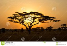 african tree silhouette | ... Beautiful African Sunset With Acacia Tree Silhouette HD Wallpaper