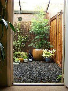 Zenith backyard?