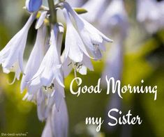 good-morning-my-sister Good Morning Honey, Good Morning Angel, Good Night I Love You, Good Morning Texts, Good Night Wishes, Good Morning Greetings, Good Morning Good Night, Morning Quotes, Morning Gif