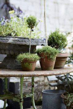 Pot Jardin, Purple Home, Garden Styles, Dream Garden, Land Scape, Garden Inspiration, Garden Pots, Garden Bed, Houseplants