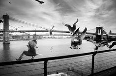 Brooklyn Bridge - New York New York - By Erkan Pinar