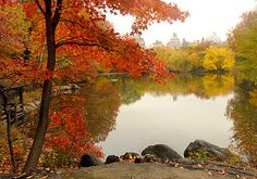 The Lake in Central Park The 20-acre Lake is the second largest ofCentral Park'sman-made water bodies. (The largest is the Reservoir.)Par...