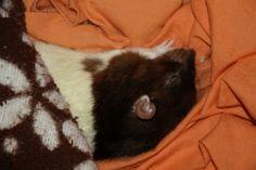 Sieste du rat : Bounty Les Rats, Ratatouille, Animals And Pets, Cats, Dumbo Rat, Parakeet, Animaux, Pets, Gatos
